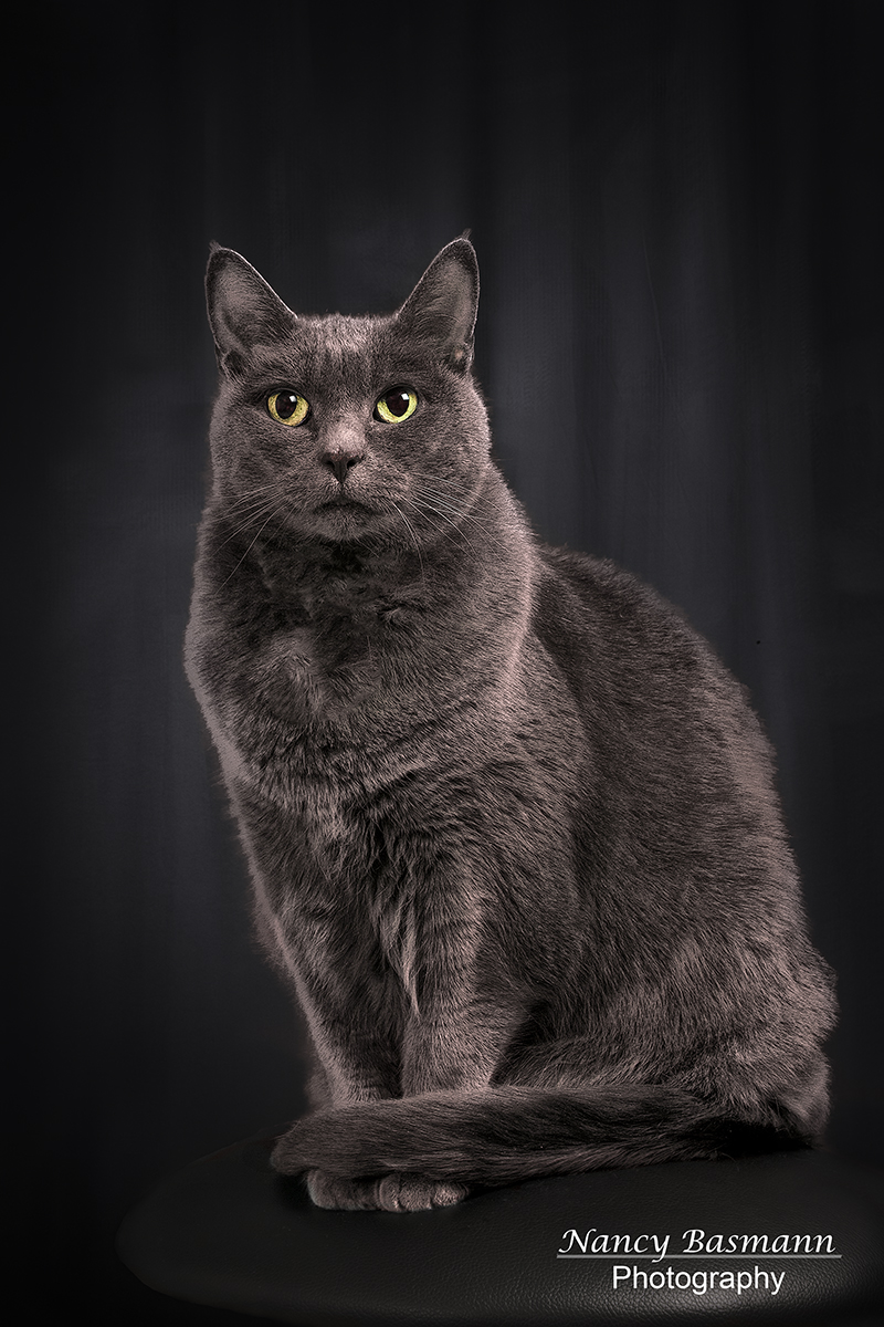 Binghamton Pet Photography--Photographic art of your beloved
