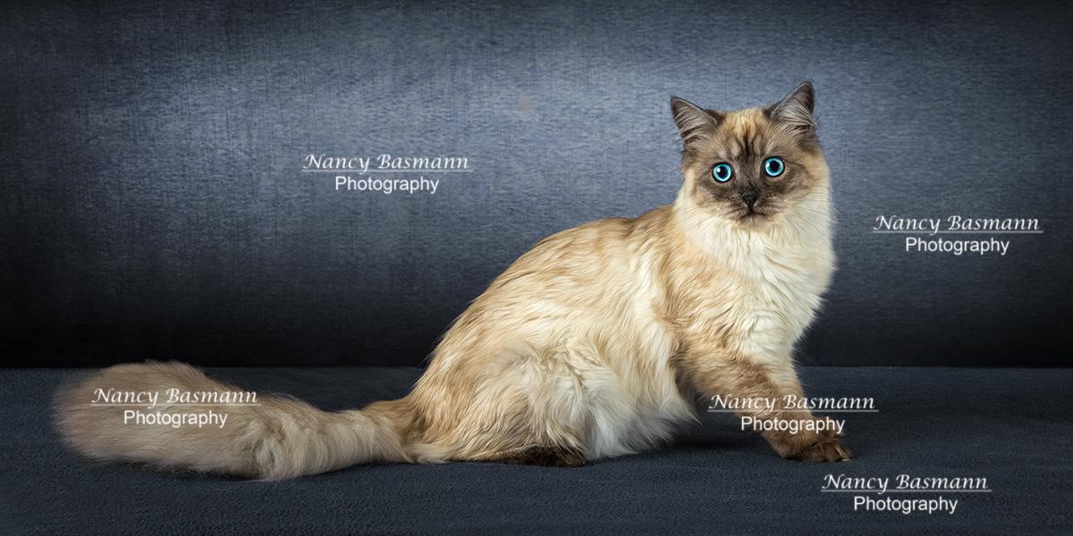 Binghmamton Pet Photography