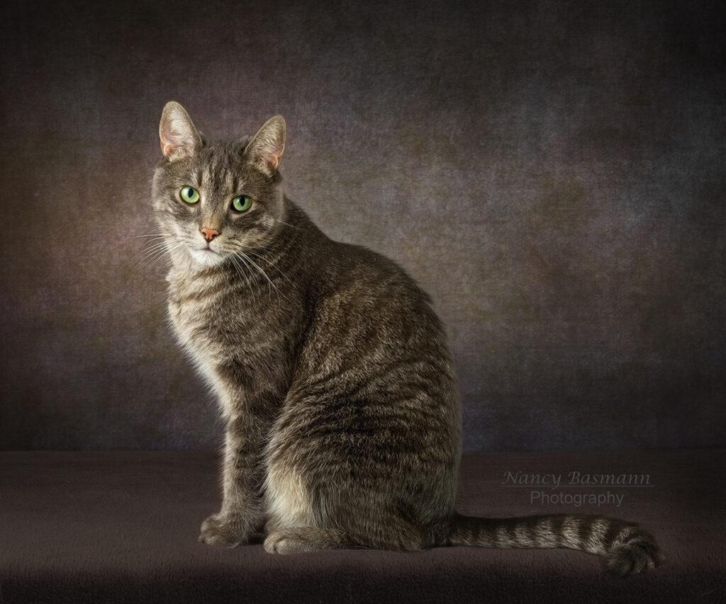 Binghamton Pets